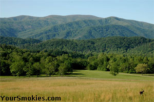 Majestic yet peaceful vistas in Cades Cove.