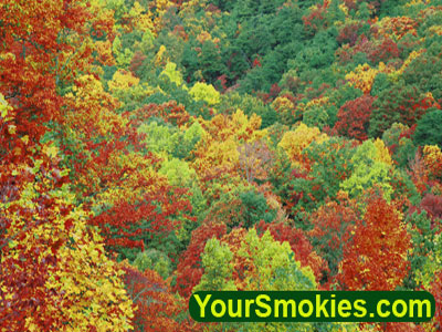 Smoky Mountains fall colors