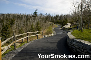 Clingman's Dome Trail is paved but extremely steep.