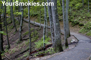 Laurel Creek Falls Trail: beautiful scenery year round