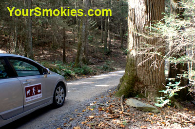 fantastic old growth trees in the the Great Smoky Mountains National Park