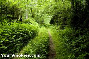 A Great Smoky Mountains National Park Hiking Trail